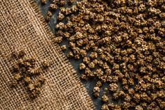 Organic Mangel Seeds on Sack Cloth and Blue Table Stock Image