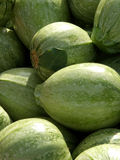 Organic Melons. Fresh organic melons just harvested from the farm royalty free stock photo