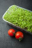 Organic micro-green salad in a plastic container with red tomatoes. Anti-stress product stock photo