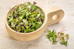 Organic micro greens Royalty Free Stock Images