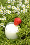 Organic milk with strawberry Stock Images