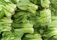 Organic Miniature Bok Choy Royalty Free Stock Photography