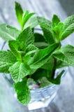Organic mint Stock Photos