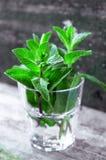 Organic mint Stock Photography