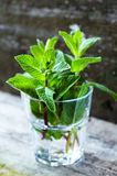 Organic mint Royalty Free Stock Images
