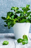 Organic mint Stock Images