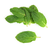 Organic mint herb leaves Royalty Free Stock Image