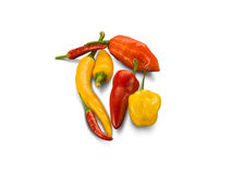 Organic Mixed Hot Chilli Peppers Royalty Free Stock Photo