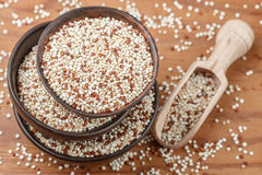 Organic mixed red and white Quinoa stock images