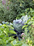 Organic mixed vegetables on the vegetable garden bed Royalty Free Stock Image