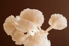 Organic Mushroom Stock Photo