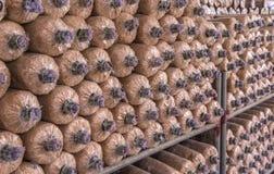 Organic mushroom growing in farm Stock Photo