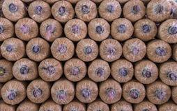 Organic mushroom growing in farm Stock Image