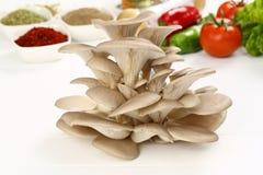 Organic Mushroom. Mushroom on preparation plate. on white royalty free stock image