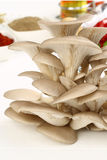 Organic Mushroom Royalty Free Stock Photo
