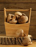 Organic mushrooms agaric honey on a wooden stump Royalty Free Stock Photo