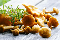 Organic mushrooms Royalty Free Stock Photography