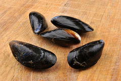 organic mussel that they are ready to eat Stock Photo