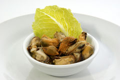 Organic mussel in a white bowl. Some organic mussel in a white bowl royalty free stock images