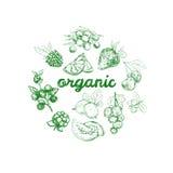 Organic Nahrungsmittelkonzept Vektorhand gezeichnete Abbildung stock abbildung