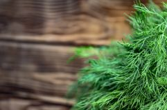 Organic natural fresh green dill on a blurred background stock images