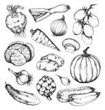 Organic natural fresh vegetables set Royalty Free Stock Photo