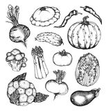Organic natural vegetables set Royalty Free Stock Photography