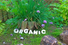 Organic Nature. The word ORGANIC in a natural garden setting stock photos