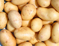 Organic new potatoes. Small organic new potatoes ready to cook Stock Image
