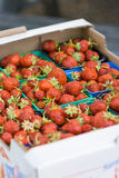 Organic Norwegian strawberies in a paper box. Stock Image
