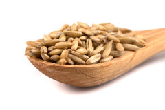 Organic oat grains Royalty Free Stock Photo