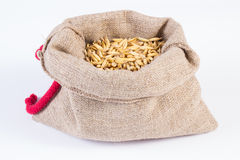 Organic oat grains in jute bag on white background Royalty Free Stock Images