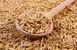 Organic oat grains with wooden spoon, healthy nutrition Royalty Free Stock Photos