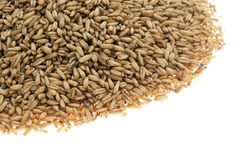 Organic oats Stock Photography