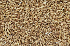 Organic oats Stock Images