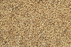 Organic oats Stock Photos