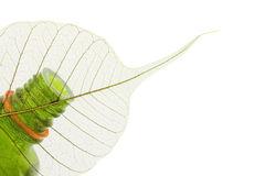 Organic oil with leaf close up. On the white isolated background Stock Photo