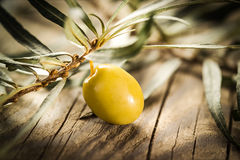 Organic olive with leaves Stock Photos