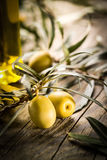 Organic olives with bottle of oil Stock Image