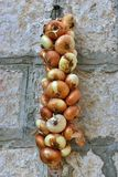 Organic onion braid. Hanging on the wall Stock Image