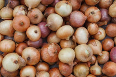 Organic onion freshly gathered, background Royalty Free Stock Photography
