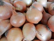 Organic onion Royalty Free Stock Image