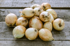 Organic onion on a wooden background Royalty Free Stock Photography