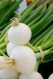 Organic Onions Stock Image