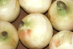 Organic Onions Royalty Free Stock Photography