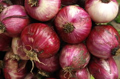 Organic onions Stock Images