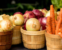 Organic Onions and Carrots in Basket Royalty Free Stock Images