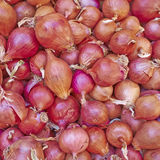 Organic onions for sale Stock Image