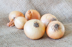 Organic onions Stock Photography