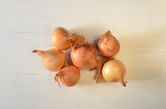 Organic onions Stock Photography